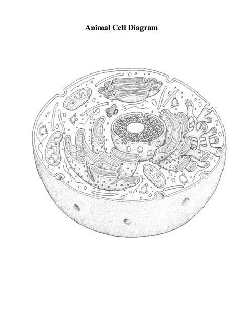 14 Best Images Of Label Cell Organelles Worksheet  Label Animal Cell Diagram Worksheet, Biology
