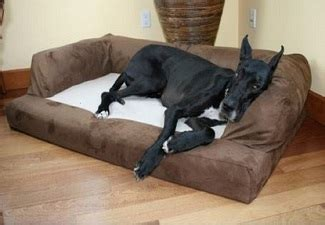 5518 great dane beds from bolster beds to orthopedic pet memory foam