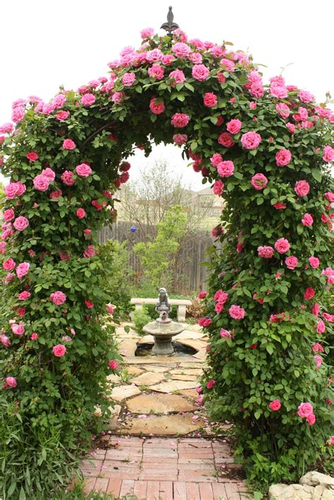 roses gardens love my cottage garden arbor bliss