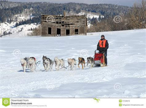 Dog Sled Team Racing Royalty Free Stock Images - Image ...