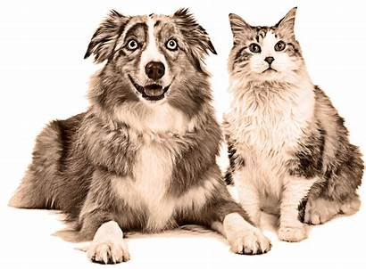Raw Why Dog Cat