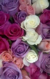 chaise cuisine couleur la signification des roses quelle couleur de roses offrir