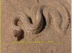 Desert Snake YouTube