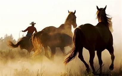 Horse Screensavers Western Cowboys Wallpapers Animals