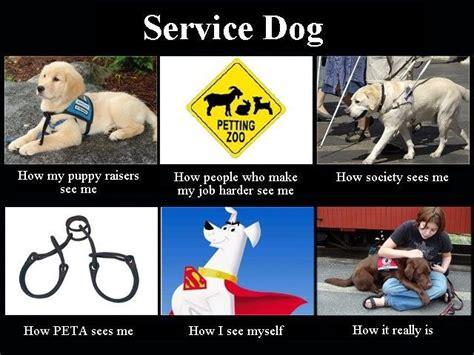 Ptsd Dog Meme - service dog quotes quotesgram service dog info pinterest service dogs and dog