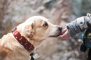 how to adopt beautiful dogs in new york city dogalize With adopting a new dog