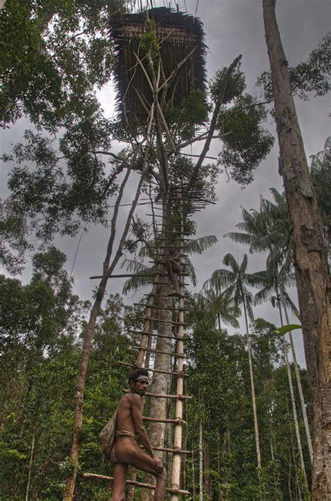 tree houses   korowai tribe   guinea
