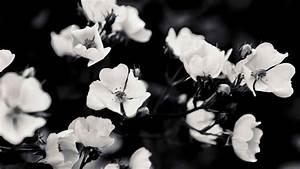 Black And White Rose Background Tumblr | Freespywarefixescom