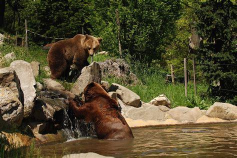 ingresso zoo di pistoia zoo di pistoia