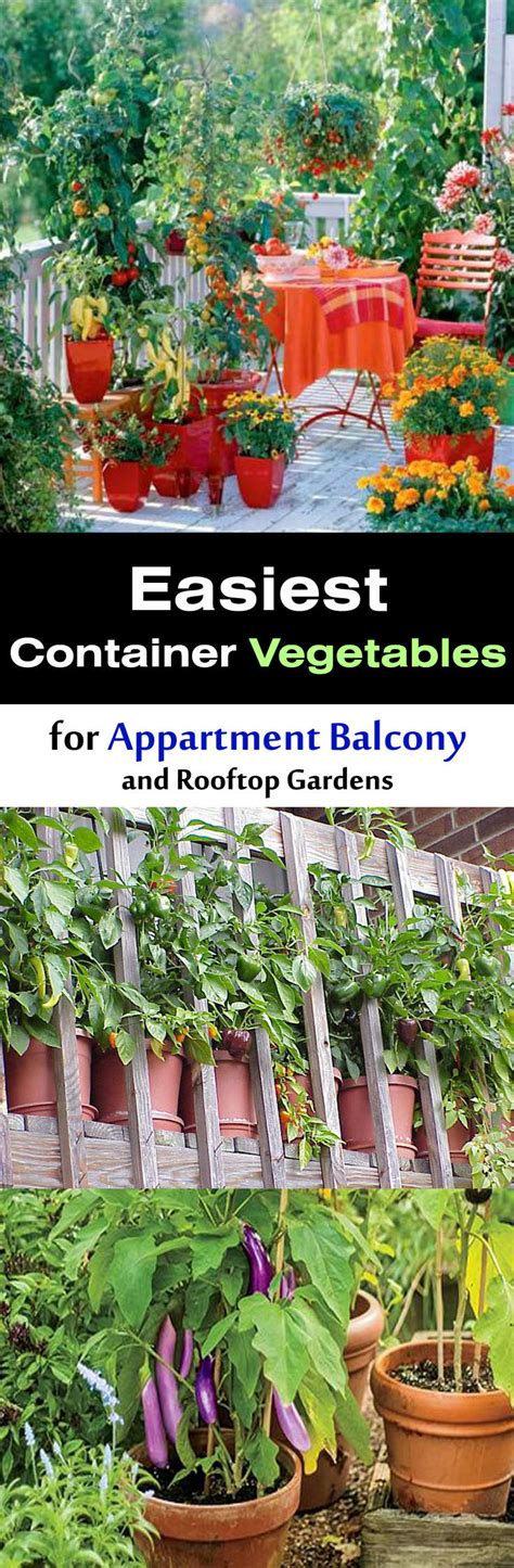 easy garden vegetables easy container vegetables for balcony rooftop garden