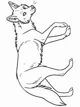 Coyote Coloring Pages Printable Print sketch template