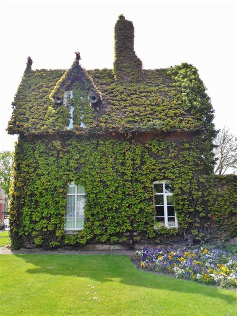 Ivy-Covered Cottage