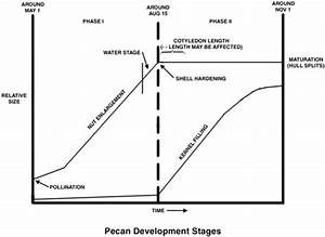 Pecan Size Chart Nmsu Growth And Development Of Pecan Nuts