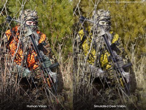 can deer see blaze orange are whitetail deer color blind 28 images deer basics