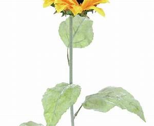Geranien Gelbe Blätter : mit der wundersch ne sonnenblume mit gelben bl ten lassen sich v ~ Orissabook.com Haus und Dekorationen