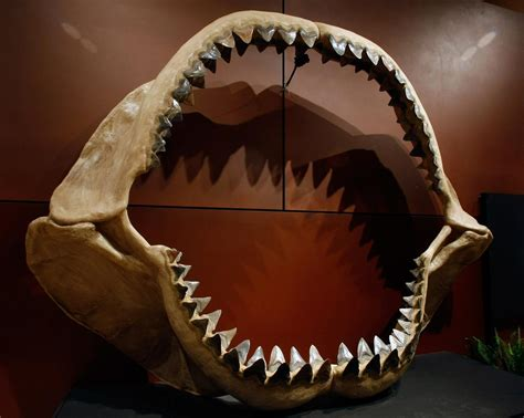 megalodon shark extinction    caused  great