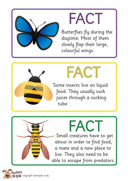 teachers pet free minibeast fact cards science and
