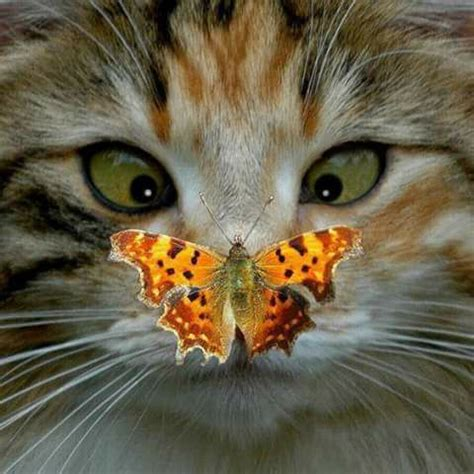 cat  butterfly   nose luvbat
