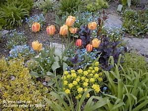 Awesome Fond Ecran Nain De Jardin Pictures - Sledbralorne.com ...