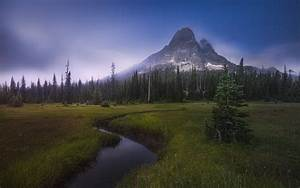 Nature, Landscape, Evening, Stars, Mountain, Forest