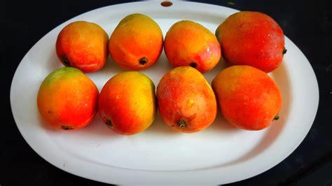 aam papadamawat mango fruit leatherdried mango pulp indian cooking manual