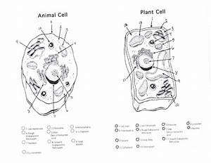 Plant And Animal Cells Diagram Quiz   Biological Science