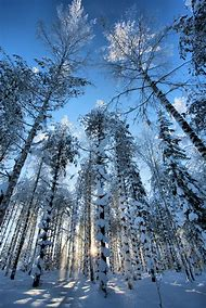 Snow Forest Photography