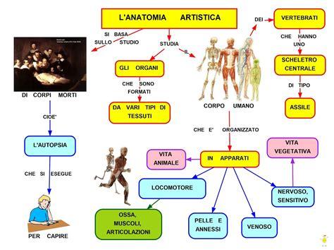 Tema Svolto Sull Illuminismo by Mappa Concettuale L Anatomia Artistica Studentville