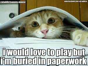 cat work work balance pancakes and parachutes