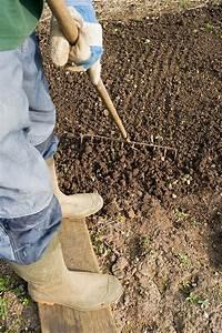 Que Planter En Juin : en juin on plante des concombres blog oleomac ~ Melissatoandfro.com Idées de Décoration