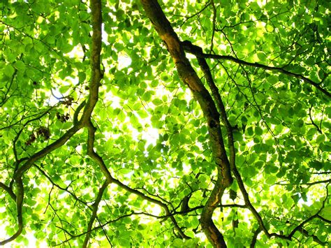 4k Images Free Download Green Tree By Bruce Denney Green Tree Light Openphoto Net 20th Aniversary Edition