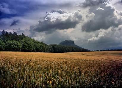 Rain Wheat March Crops Agriculture Winter Pour