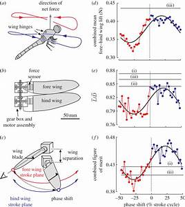 The Mechanical Dragonfly And Results Derived From Force