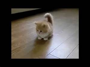 The Most Beautiful Cat In The World - YouTube