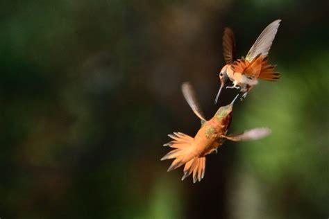 hummingbird and butterfly bonanza natural moments