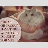 Robo Dwarf Hamster Cages | 1024 x 768 jpeg 154kB