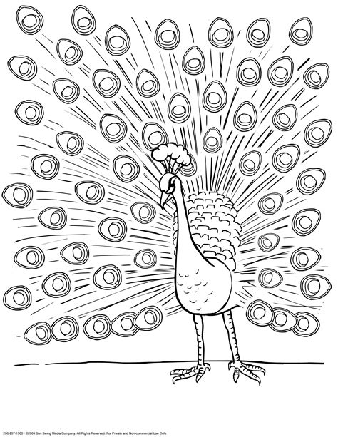 peacock feathers coloring pages   print