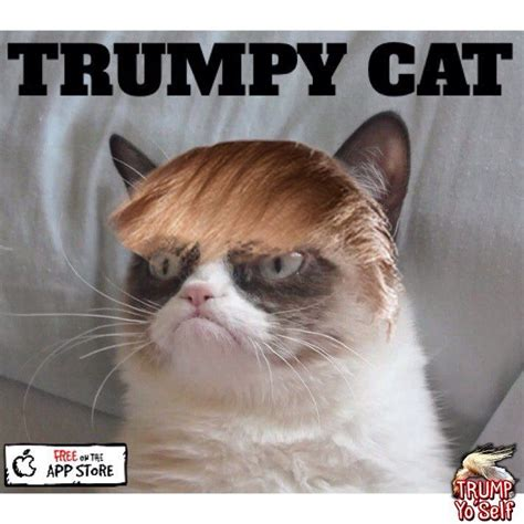 Cat Interesting Meme - trumpy cat lol pinterest cat