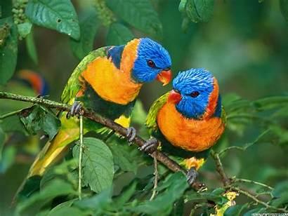 Birds Wallpapers Background Bird Definition Backgrounds Parrot