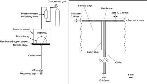 Schematic Diagram The Pressure Membrane Apparatus Left