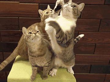 le canapé gif sur yvette jeu petit photos de chats