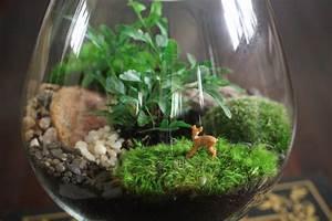Acheter Terrarium Plante : terrarium choix du r cipient des plantes et mise en place ~ Teatrodelosmanantiales.com Idées de Décoration