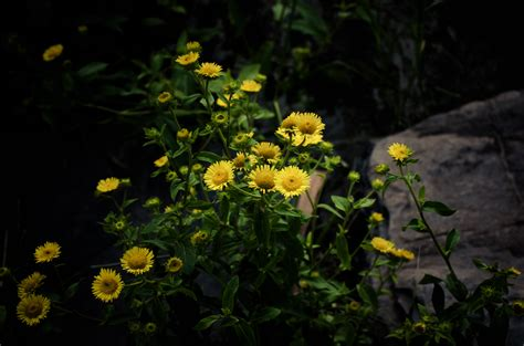 wallpaper sunlight flowers nature green yellow