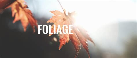 accepting submissions foliage prompt  prompt magazine