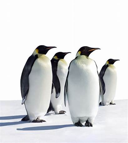 Penguins Business Development