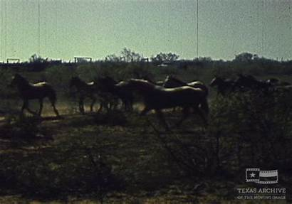Trail Texas Horse Goodnight Loving Moving Giphy
