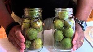 benefits of black walnut hull tincture