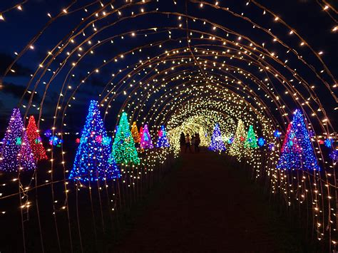 life university christmas lights 2017 look 39 magical field of lights 39 in nuvali is the perfect