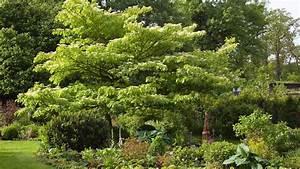Garten Pflanzen : mit diesen pflanzen wird der garten schneller gr n ~ Eleganceandgraceweddings.com Haus und Dekorationen