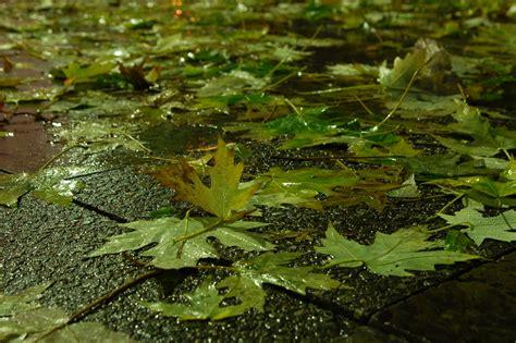 regenwetter foto bild jahreszeiten herbst wasser